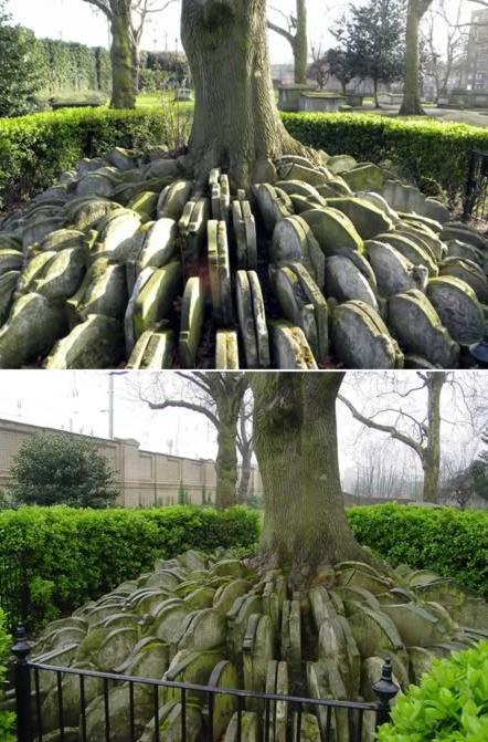 墓地种什么树好